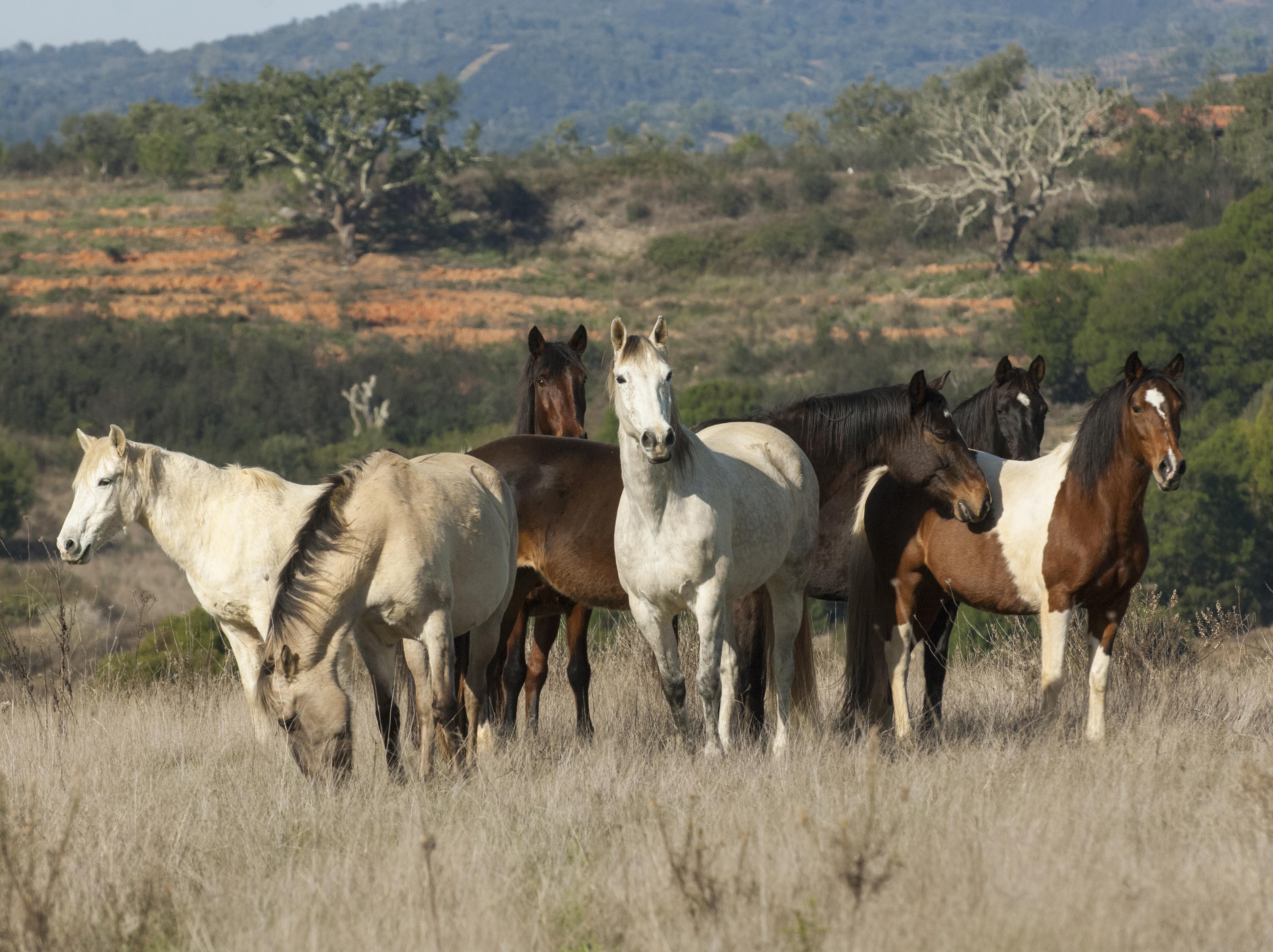 horse project cooperative horse husbandry